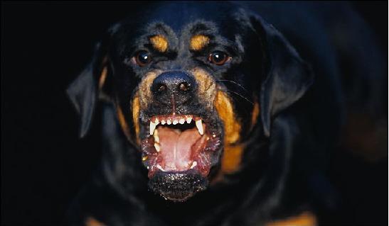 આ Dog Owners કેટલી સહજતાથી આપણને કહી દેતા હોય છે...