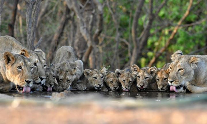 Hakunamatata!  Picture Courtesy: Mukesh Acharya - Wildlife photographer.