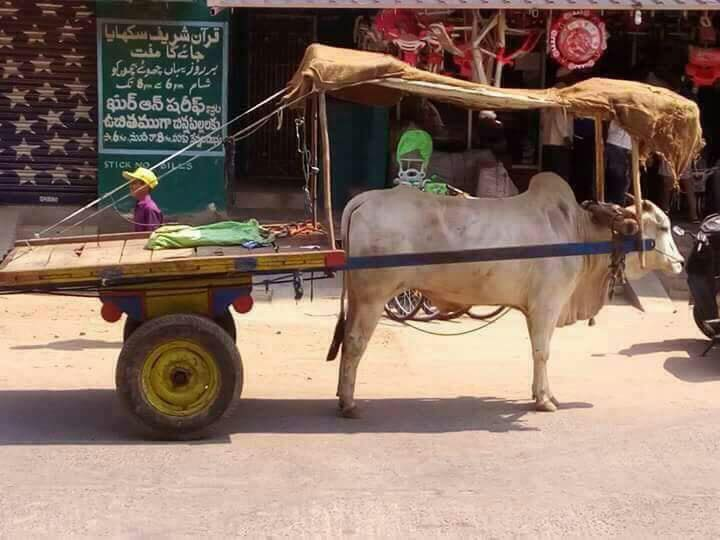 Full Marks to the Cart Owner!  #Summer   Image Source: Whatsapp