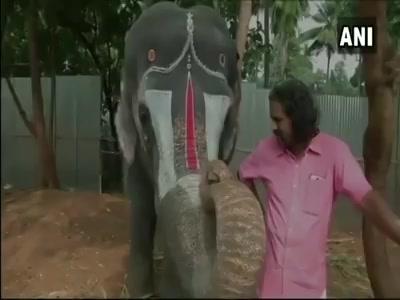 An elephant in Tamil Nadu can play harmonica.. #elephant #harmonica #mouthorgan