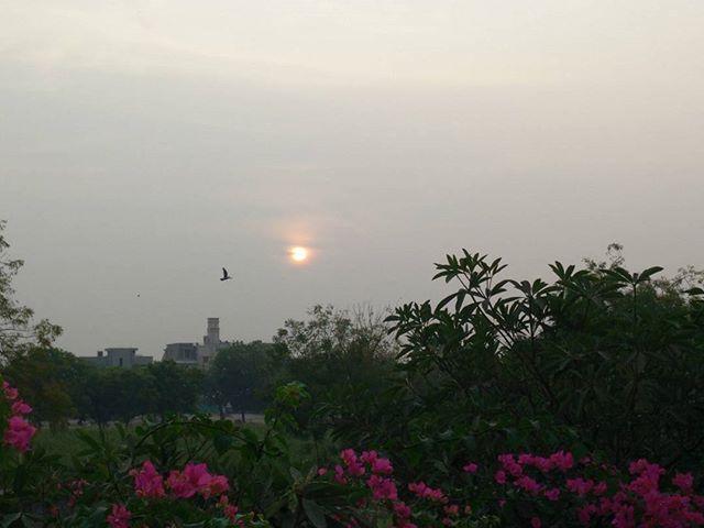 #good #morning #amdavad! It's quiet an unsual weird morning.. #cloudy #sunrise #winterishere #winteriscoming #rainy #ahmedabad #flowers