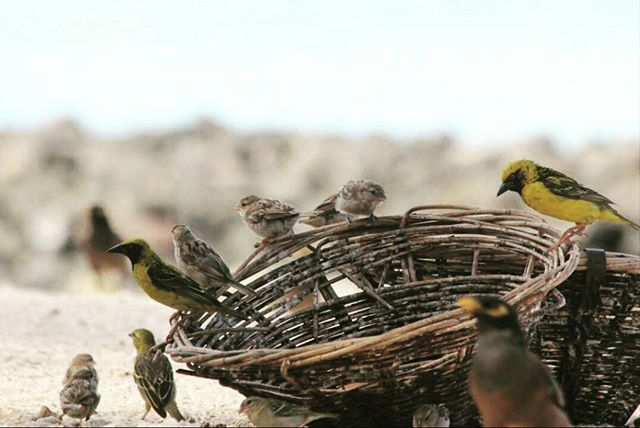 Happy World Sparrow Day!  #sparrow #sparrows #chakli #worldsparrowday