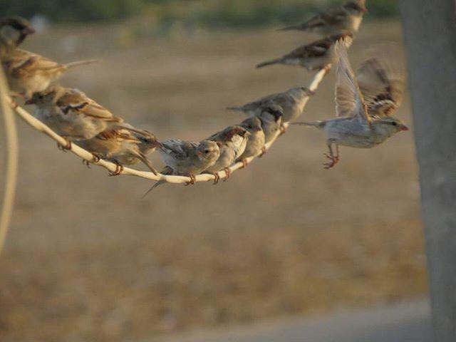 RJ Dhvanit,  sparrow, worldsparrowday, sparrows