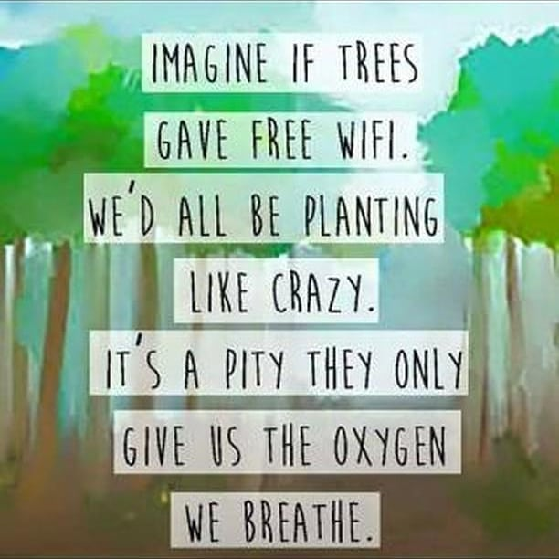 Imagine if tree Gave us wifi, wont we all be planting it?! Join me and become a 'ped-man'! Lets plant 1 lakh trees in #ahmedabad and make it more #greener.  To register for your saplings send me a DM or fill the form link in my bio  #treeidiots #treeidiot #treeidiot3 #tree #trees #gogreen #ecofriendly #monsoon #monsoons #amc #ahmedabad #dhvanit