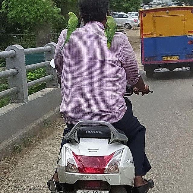 કોઈ આ ભાઈને ઓળખે છે? આપણે એમની આ દોસ્તી વિશે જાણવું છે. Pic by @keyur_modi_89 near Akhbarnagar (I have deliberately not shown the number plate)