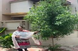 Green Audit by Gulnaaz Munir!   ચાલો કરીએ ગ્રીન ઓડીટ!   તમારે ત્યાં Tree Idiot campaign માં ભૂતકાળમાં વાવેલા ઝાડ કેટલા ઉગ્યા, કેટલા બચ્યા એનો વિડીયો social media માં શેર કરો અને મને ટેગ કરો. હેશટેગનો ઉપયોગ કરજો.   #Treeidiot #greenaudit #aatmanirbharmirchitreeidiot #green #treesofinstagram #mirchitreeidiot #MirchiGujarati #Gujarat #amdavad #ahmedabad